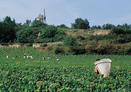 Les vendanges ©Coted'OrTourisme