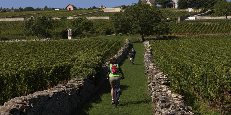 Typische Steinmauern in den Weinbergen © Studio Piffaut