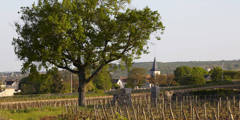 Der Winzerort Chassagne-Montrachet © Atelier photo Muzard