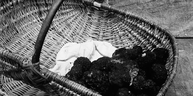 Truffes de Bourgogne