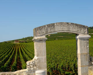 Willkommen in der Region Pays Beaunois!