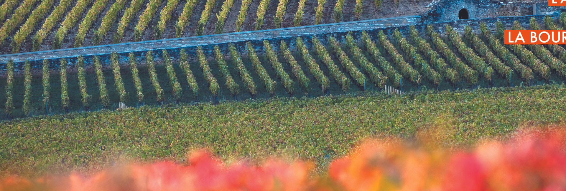 """Die Weinberge der Region - """"Climats de Bourgogne » - M.Joly"""