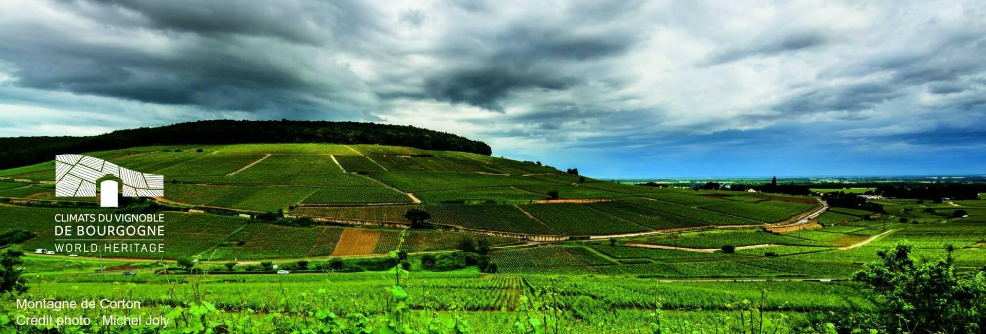 """Die Weinberge der Region - """"Climats de Bourgogne » - jetzt UNESCO-Welterbe. Montagne de Corton"""