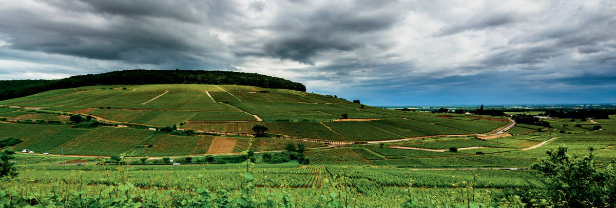 "Die Weinberge der Region - ""Climats de Bourgogne » - M.Joly Montagne de Corton"