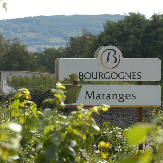 Die Weinberge der Maranges